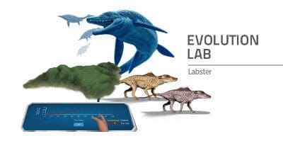 evolution_lab_final_s