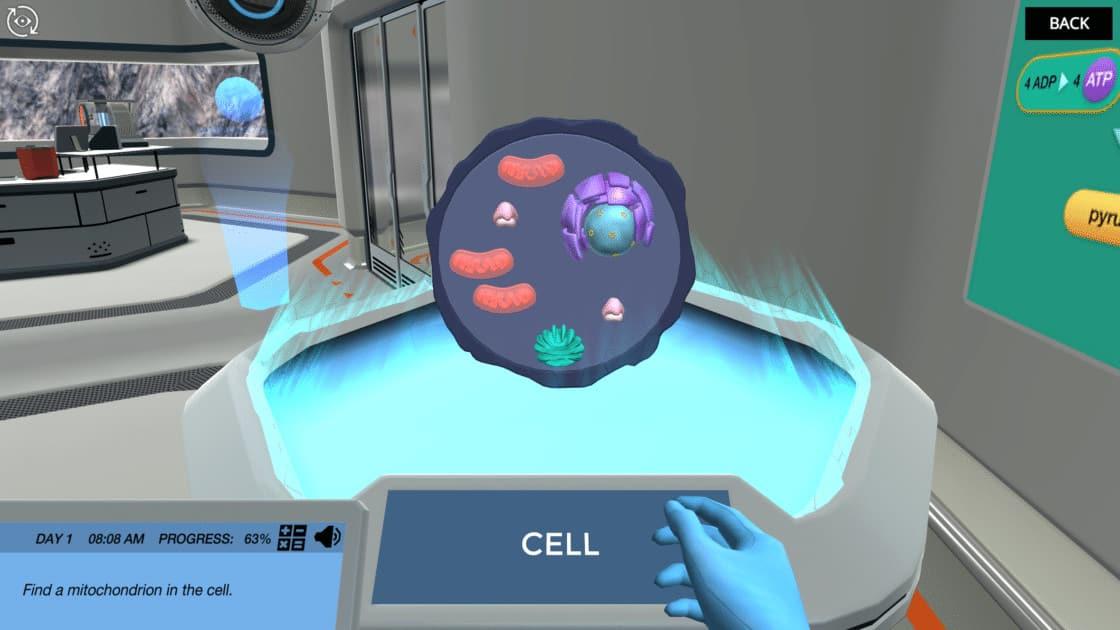 Cellular Respiration (Principles)