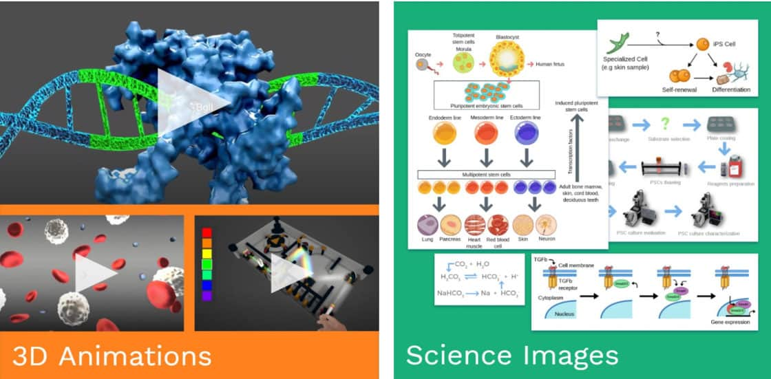 Labster 3D Animations and Science Images